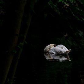 Zwaan in de duisternis van Emile Bosch