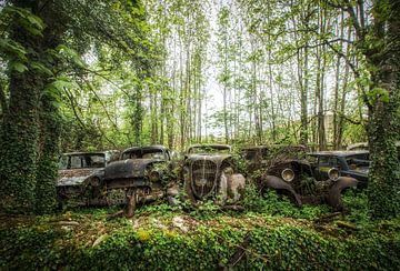 Oldtimers in bos van Kelly van den Brande