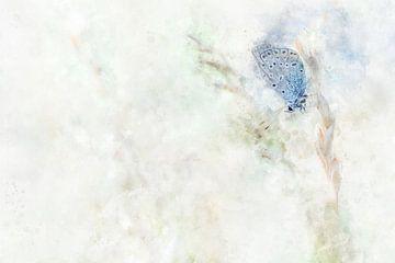 Papillon 9 sur Silvia Creemers