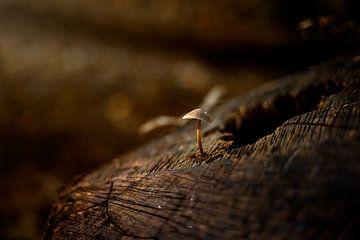 eenzame paddenstoel van Yara Verstappen