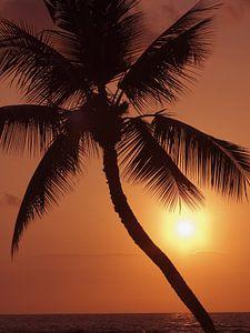 LP 70485262 Hawaii, palmboom silhouette met oranje lucht over de Oceaan