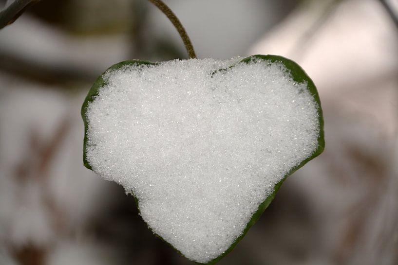 Sneeuwhart van FotoGraaG Hanneke