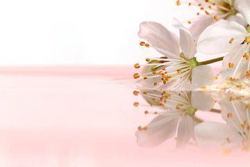 Ein verträumtes Porträt einer im Wasser schwebenden weißen Blüte vor weißem, rosa Hintergrund. von Joeri Mostmans
