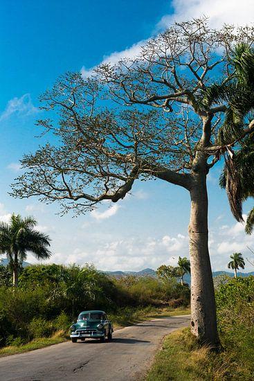 Pinar del Rio, Cuba van Frank Laurens