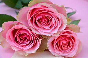 Nahaufnahme von drei rosa Rosen von Trinet Uzun