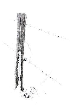 Wiesenpfahl in schwarz und weiß von Guido Rooseleer
