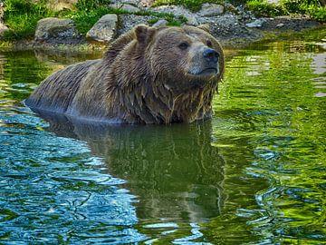 Braunbär im Wasser von Ralf Schroeer