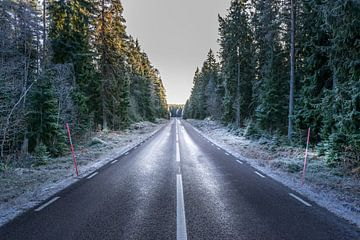 The road van Niklas Lorenson