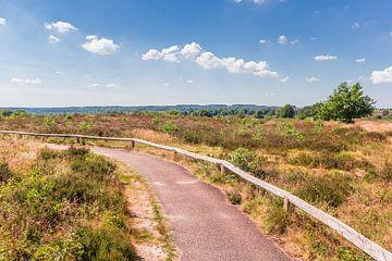 Wanderweg im Nationalpark Sallandse Heuvelrug von Marc Venema