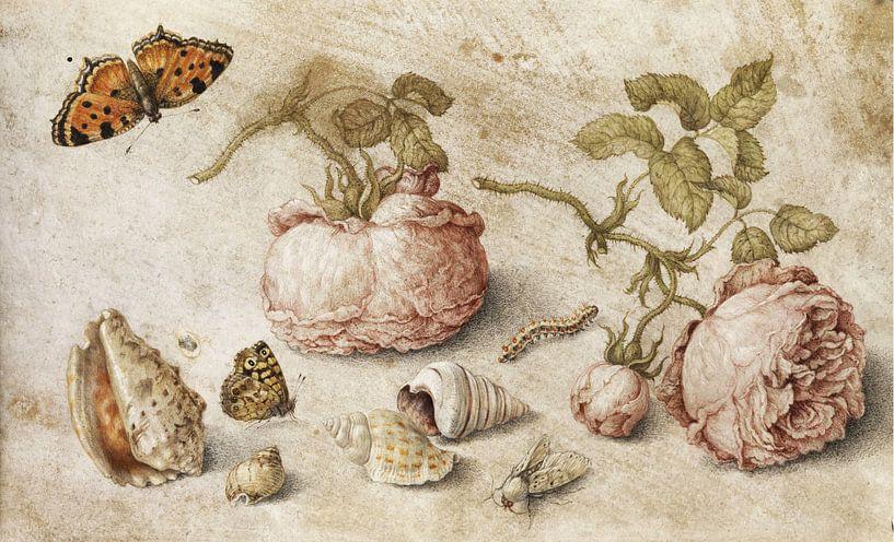 Trompe l'oeil Stillleben, Jan van Kessel von Meesterlijcke Meesters