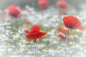 Tussen de bloemen