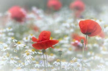 Tussen de bloemen van Klaas Fidom