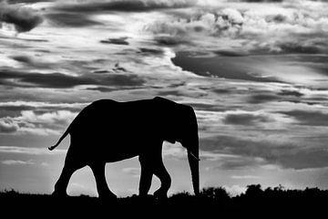 Olifant silhouet tegen wolkenlucht van Jos van Bommel