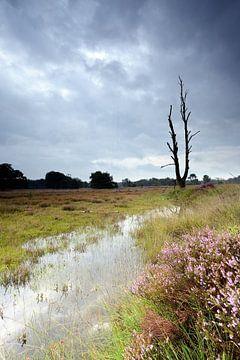 Threatening sky above the blooming heather sur Gonnie van de Schans