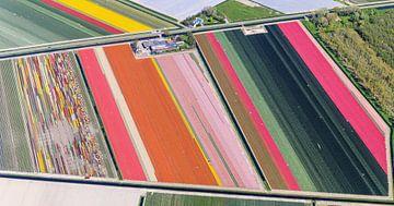 Blumenzwiebeln in Reihen von Robert Riewald