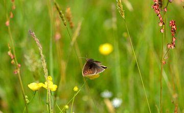 bloemenveld met vlinder von Petra De Jonge
