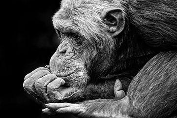 Chimpansee is aan het dromen. van Michar Peppenster