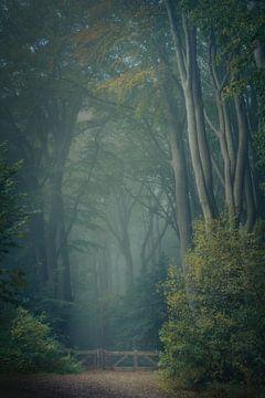 Märchenwald irgendwo in den Niederlanden von Vincent Fennis