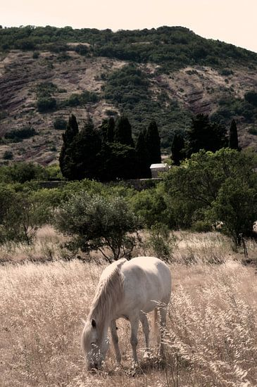 Wit paard in de wei