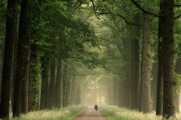 Serenity. sur Inge Bovens