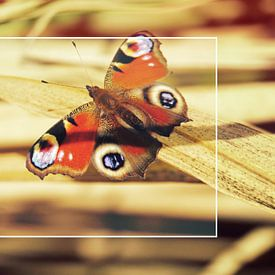 Vlinder op bamboe van Wieland Teixeira