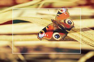 Schmetterling auf Bambus von Wieland Teixeira