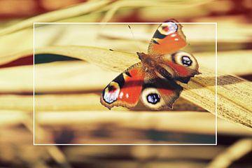 Vlinder op bamboe