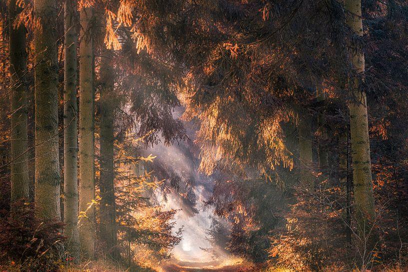 Herfst naaldbos in de mist met zonnestralen van Peter Bolman