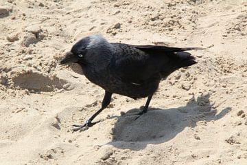 vogel in het zand von Danielle Vd wegen