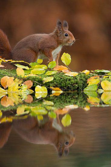Eekhoorn in herfstsetting.