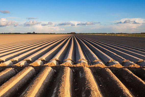Dutch acres / Akkerland van Ton Drijfhamer