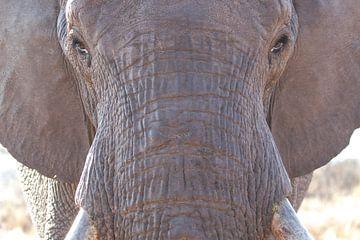 Nahaufnahme Elefant von RobJansenphotography