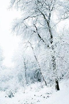 Bos in de sneeuw van Douwe Schut