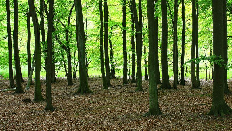 Waldpanorama von Ostsee Bilder