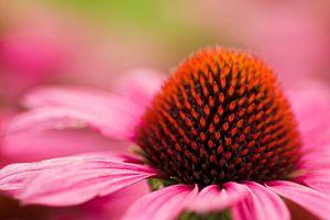 Flower 'Pink'