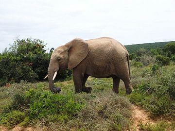 Lopende olifant von Robin van Tilborg