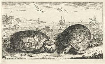 Zwei Schildkröten am Strand von Albert Flamen, 1664