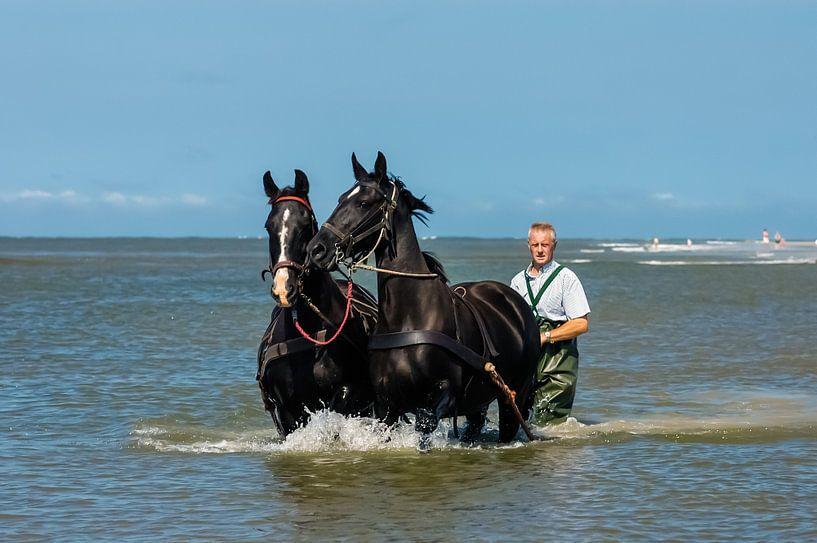 Paarden in zee bij Ameland van Brian Morgan