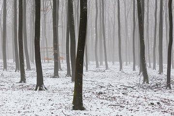 L'hiver dans le Veluwe sur Rob Kints
