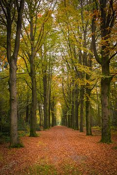 Wald von Eriks Photoshop by Erik Heuver
