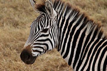 Zebra op de Serengeti - Dit is Afrika! van Charrel Jalving