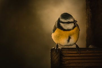 Vogels in de sneeuw. van Marleen Schrijver