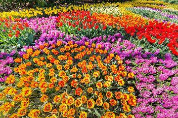 Blumenbeet mit verschiedenen bunten Tulpen, Hyazinthen und Narzissen von Ben Schonewille