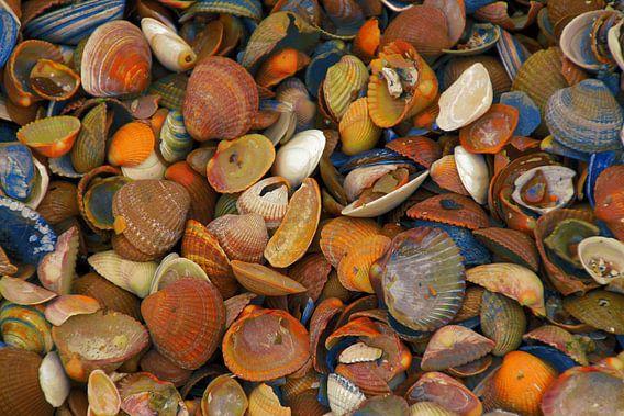 gekleurde schelpen