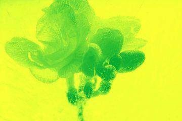 Freesie 2 in het groen van Marc Heiligenstein