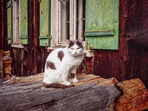 Kat van Rob Boon