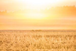 Natuur   Gouden zonsopkomst van