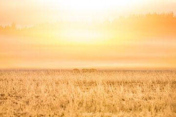 Natur | Golden Sonnenaufgang von Servan Ott