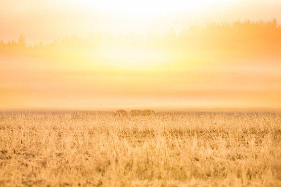 Natuur | Gouden zonsopkomst van Servan Ott