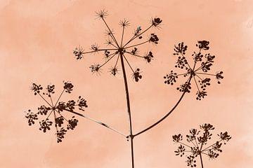 Berenklauw, botanische print in perzik kleur